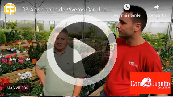 can juanito video